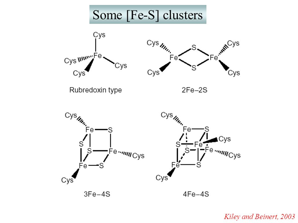 Some [Fe-S] clusters Kiley and Beinert, 2003